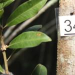 Exemplo de instalação de plaquetas plásticas e registro fotográfico de espécies botânicas.