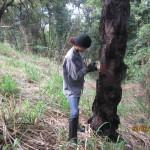 Inventário florestal em Lagoa Santa. Metodologia: censo. Característica: área urbana com aproximadamente 900 árvores.