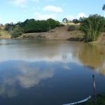 o projeto sempre pretende mitigar o assoreamento nas áreas de borda das lagoas, rios, ribeirões, córregos.
